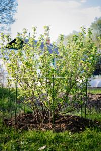Колышки садовые для сада и огорода. Колышки для теплицы. Опоры для цветов. Применение колышек для сада и огорода