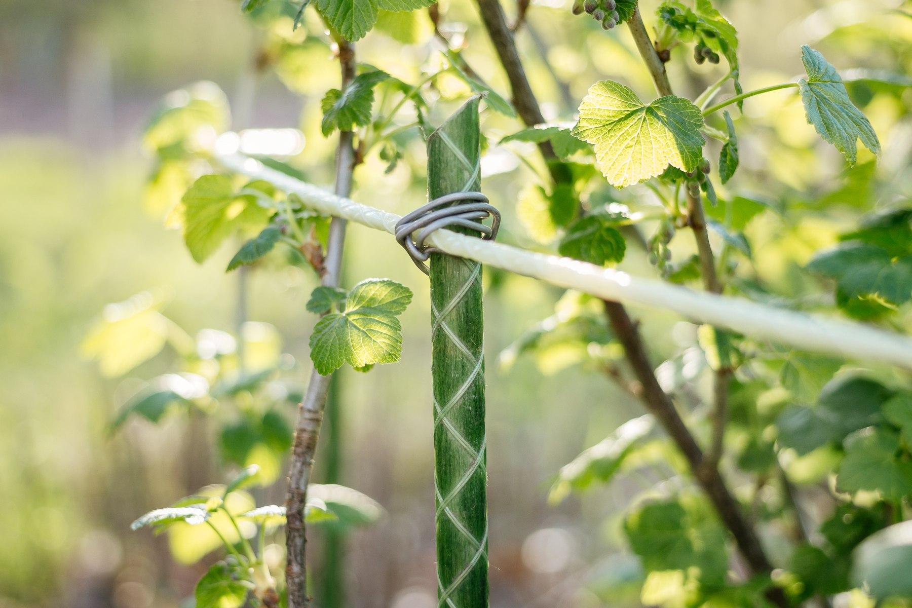 Применение продукции, Колышки садовые для сада и огорода. Колышки для теплицы. Опоры для цветов